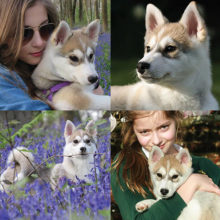 Jackie-Mat-Ruby-and-Violet-Hall-Pomsky-Pixie-UK-United-Kingdom