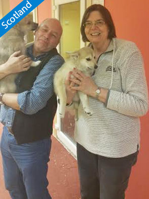 pomsky-visitor-rob-and-maralyn